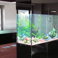 Egyedi akvárium